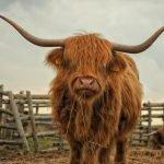 The Bull Case for YFI